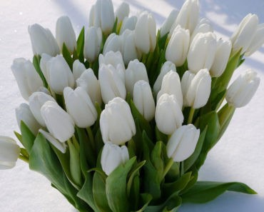 Викторина на 8 марта