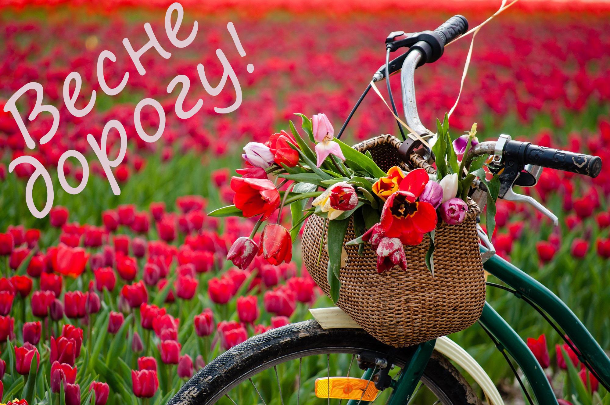 Цитаты о весне красивые и короткие