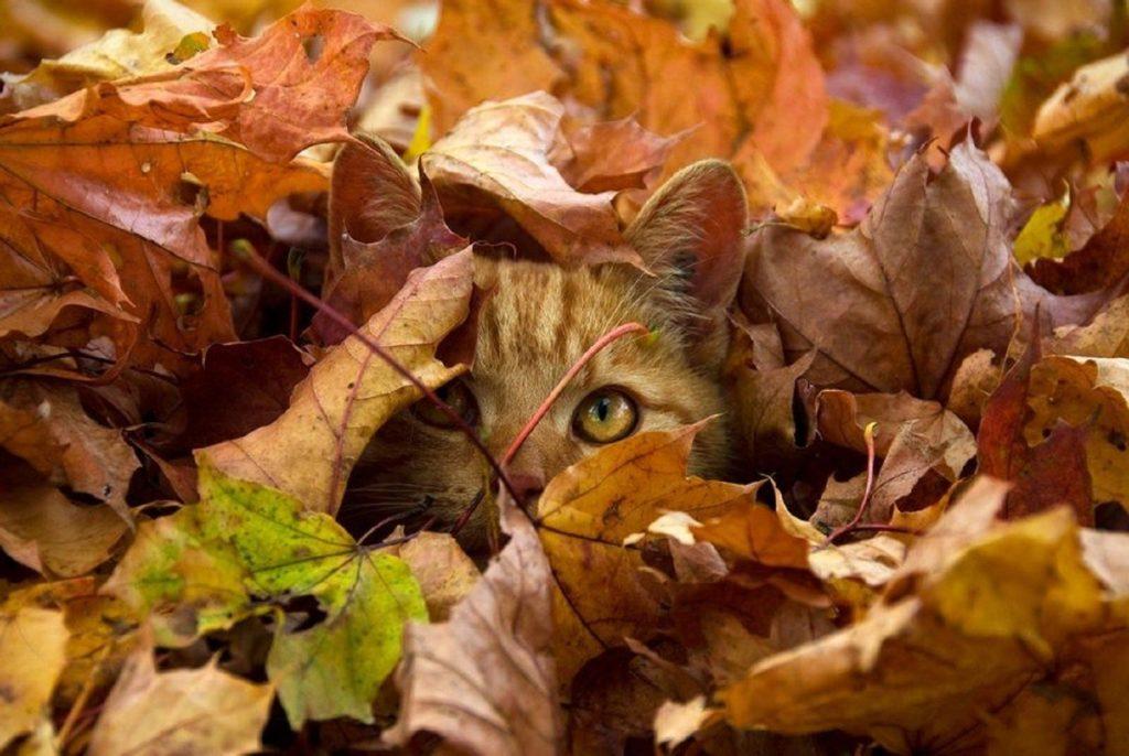 когда начинается осень