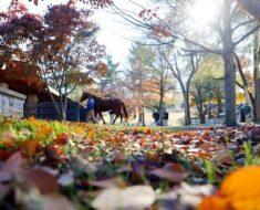 Ноябрь- последний месяц осени