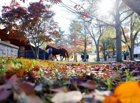 ноябрь - последний месяц осени