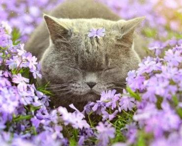 Весенний месяц апрель