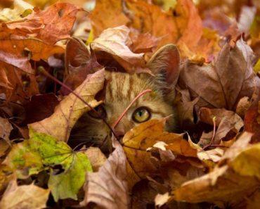 Когда начинается осень?