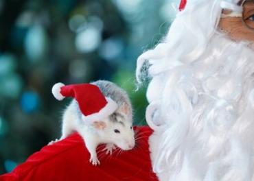 Викторина на год Крысы